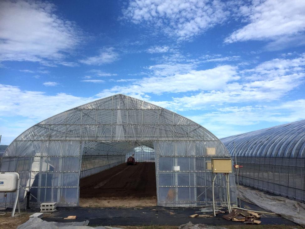 ハウス 土壌整備