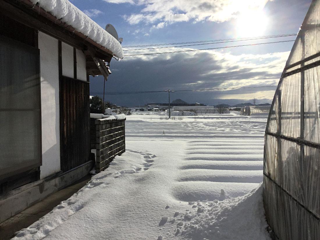 畑 雪景色