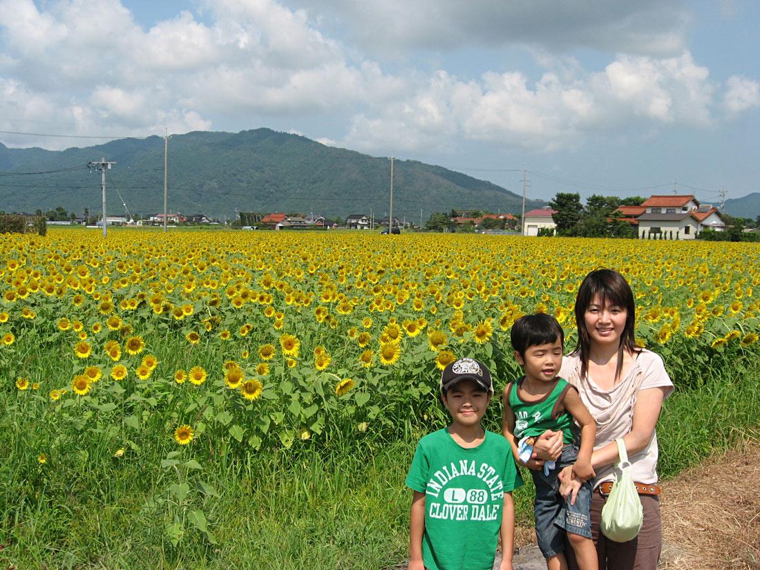 島根県斐川町ひまわり畑