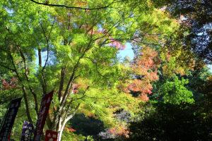 安来市清水寺の紅葉