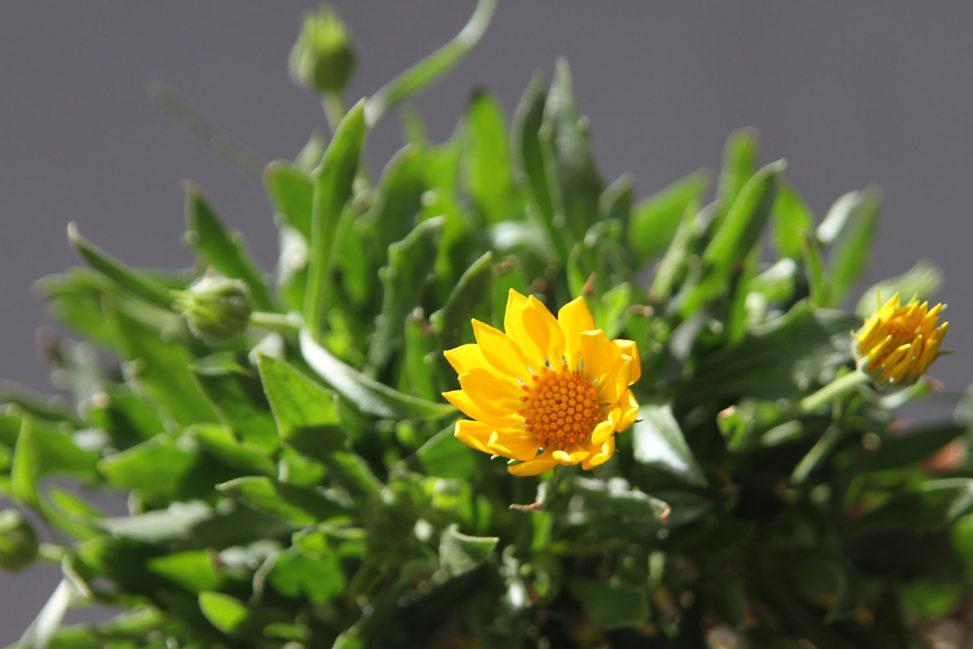 陽射しを浴びる花