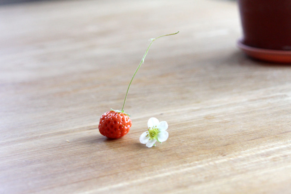 さくらんぼいちご