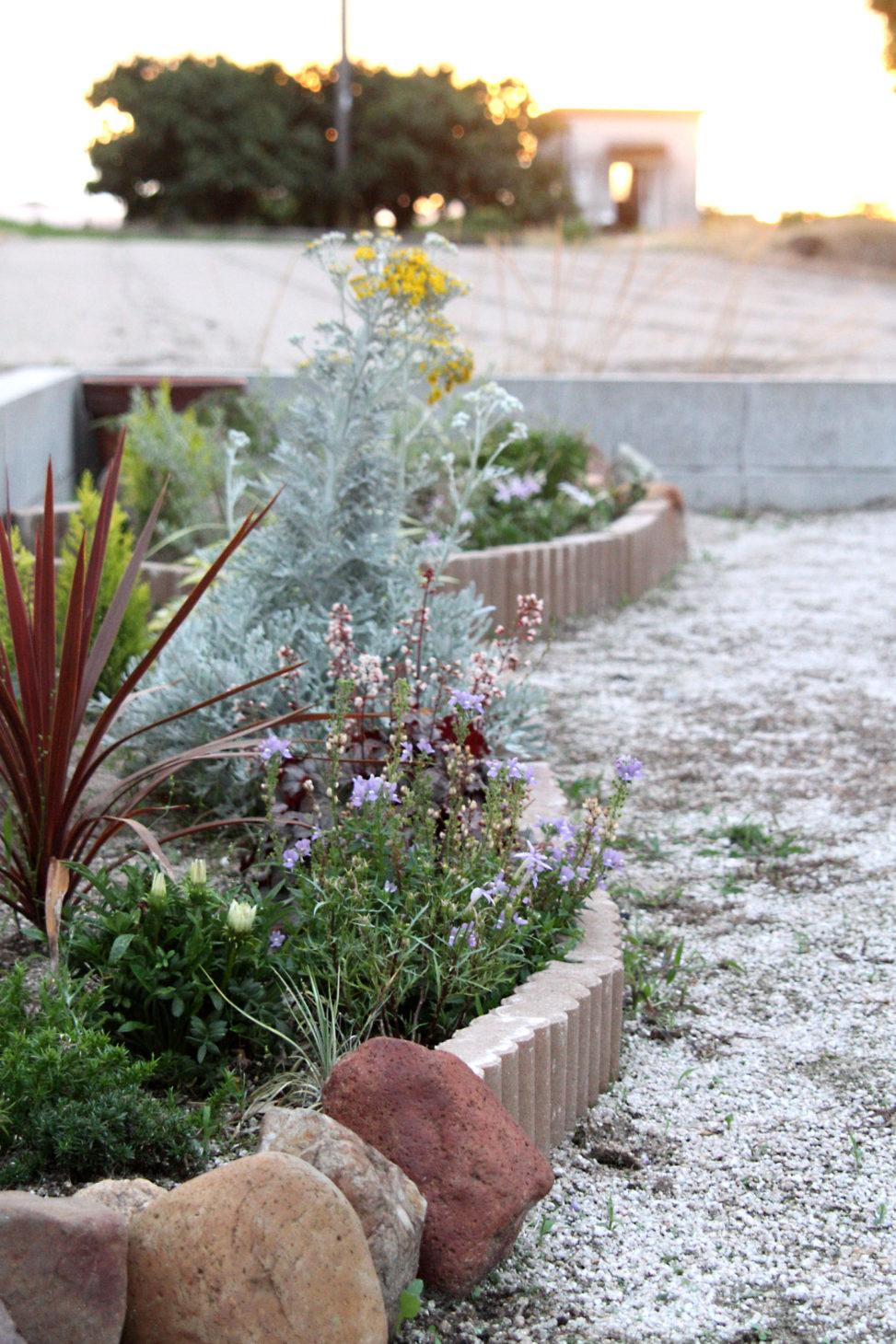 自宅の花壇