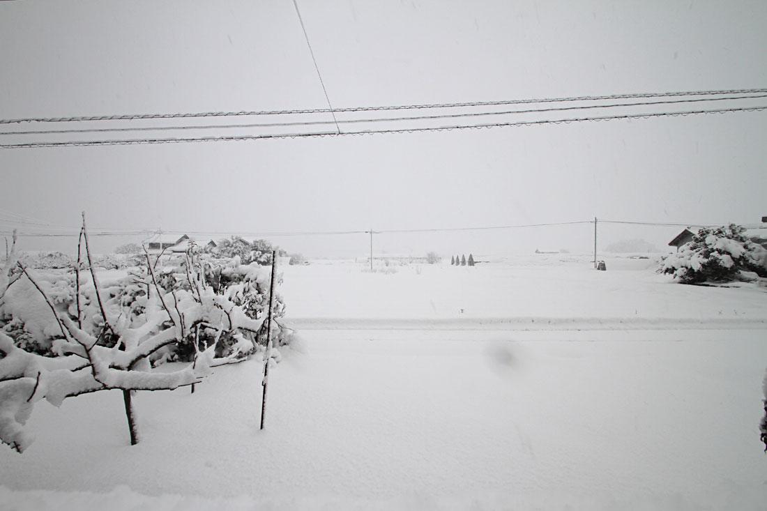 大雪 家の庭から