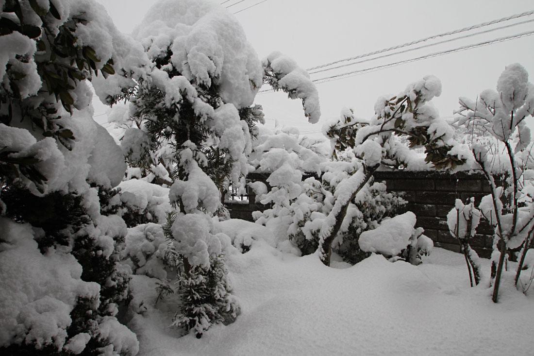 ここ安来は大雪