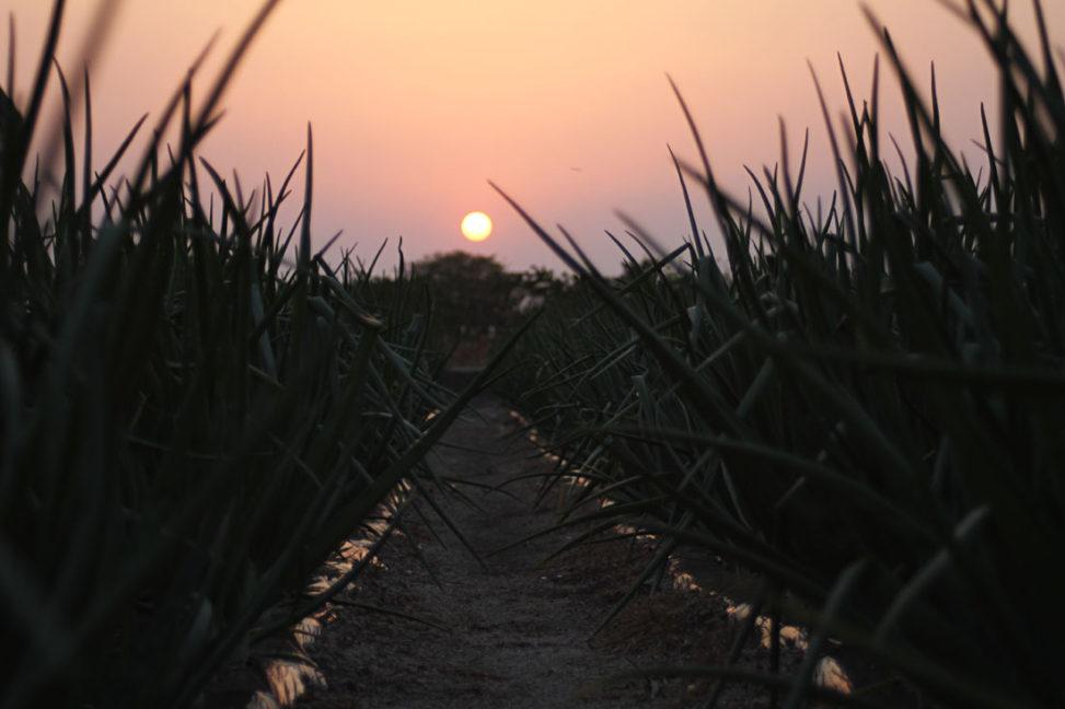 安来市の夕日