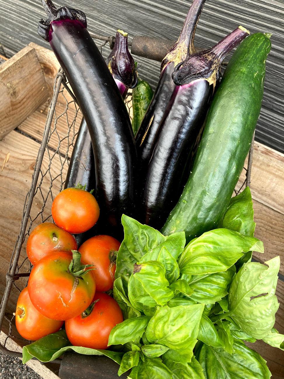 家庭菜園 夏野菜