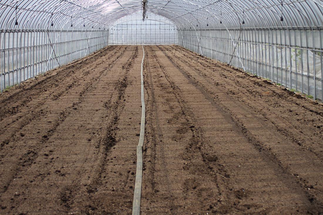 いちご本圃太陽熱消毒後の散水