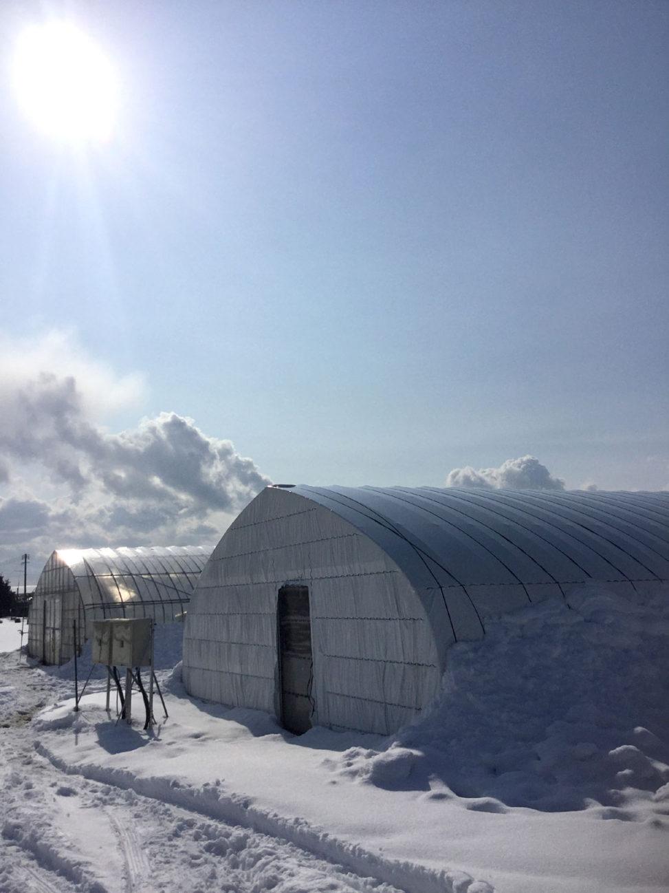 雪の中のいちごハウス