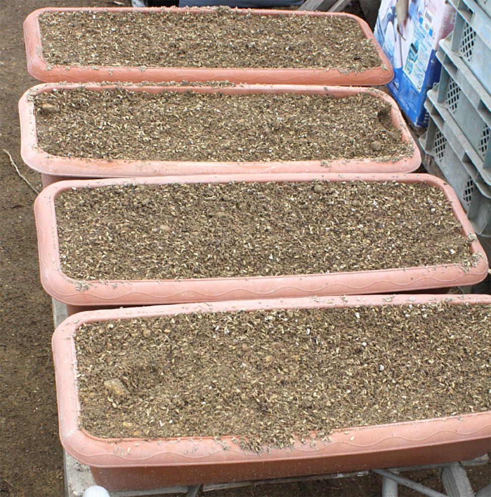 いちご苗用プランター土