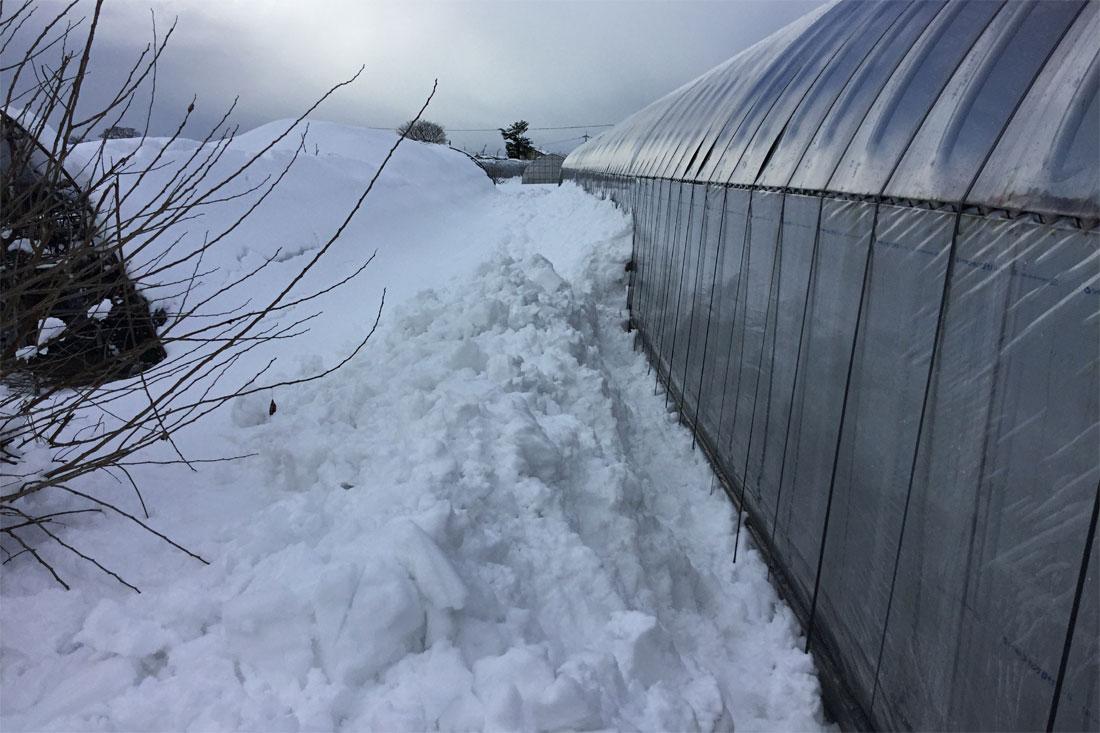 いちごハウス雪かき